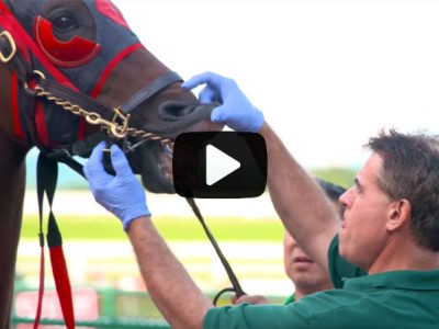 HORSE IDENTIFICATION