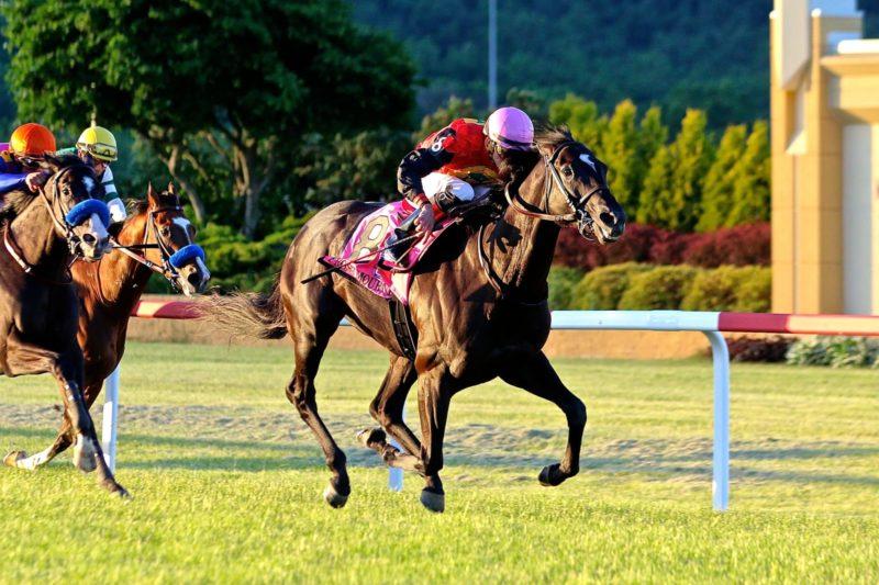 pa hbpa jockey racing